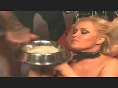 Slurping Cum out of of a Dog Bowl