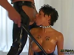 Short Haired Brunette Blows Cock